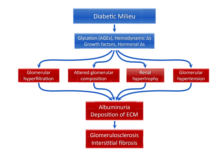 Pathophysiology of diabetic nephropathy Abbreviations